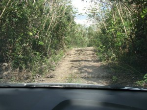 jungle drive